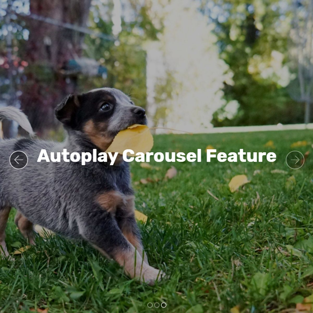 Bootstrap Autoplay Carousel Feature